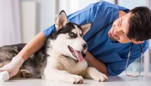 Encuentra los mejores veterinarios de Murcia